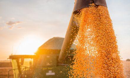 Bahia mantém estimativa de safra recorde de 9,9 milhões de toneladas de grãos em 2020