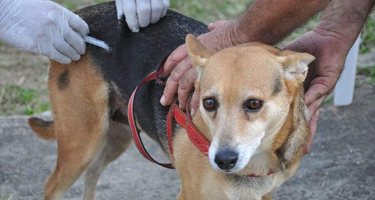 Itacaré intensifica campanha  de vacinação de cães e gatos